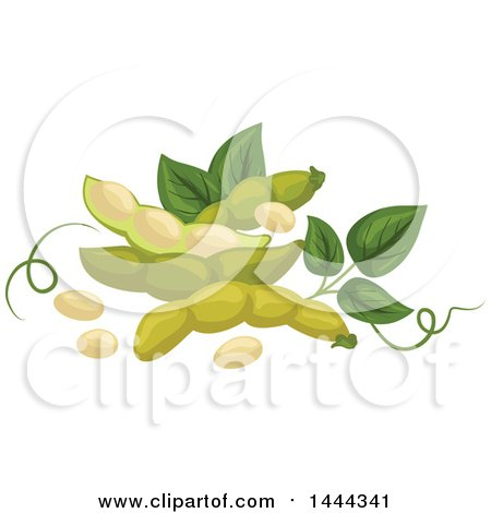 Clipart of Soybeans, Pods and Leaves - Royalty Free Vector Illustration by Vector Tradition SM
