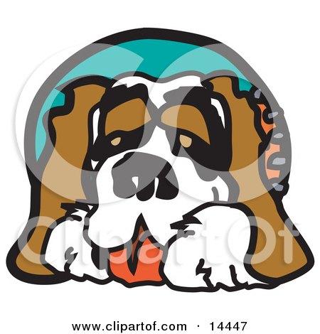 Cute St Bernard Dog  Posters, Art Prints