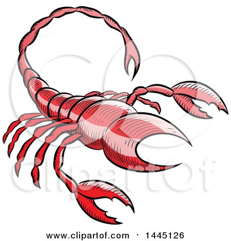 Clipart of a Sketched Red Astrology Zodiac Scorpio Scorpion - Royalty Free Vector Illustration by cidepix