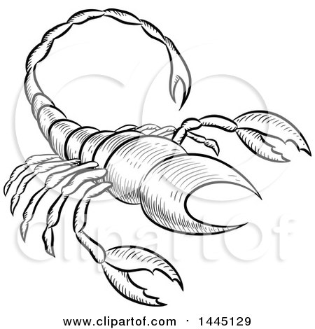 Clipart of a Sketched Black and White Astrology Zodiac Scorpio Scorpion with a White Fill - Royalty Free Vector Illustration by cidepix
