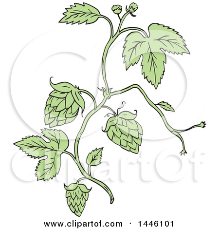 Clipart Of A Sketched Styled Hop Plant Royalty Free Vector Illustration