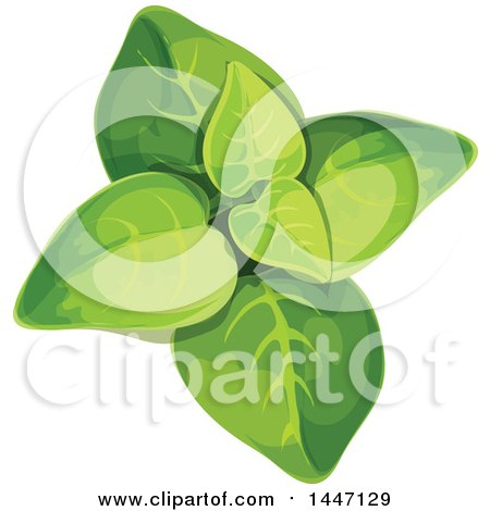 Clipart of a Marjoram Plant - Royalty Free Vector Illustration by Vector Tradition SM