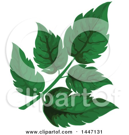 Clipart of Green Angelica Leaves - Royalty Free Vector Illustration by Vector Tradition SM