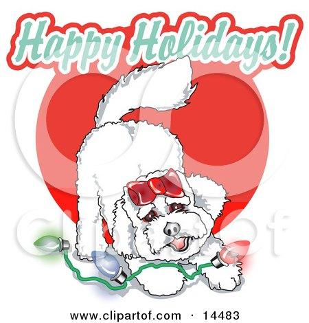 Playful Bichon Frise Dog With Christmas Lights  Posters, Art Prints
