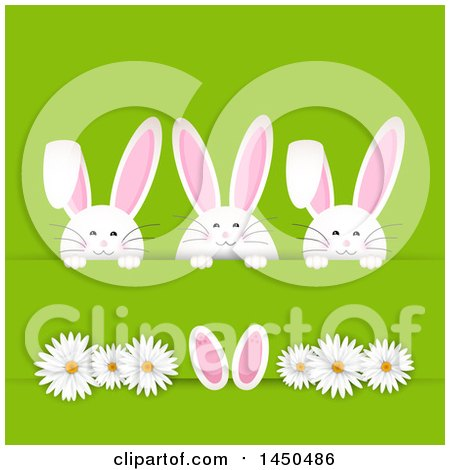Clipart Graphic of a Trio of White Easter Bunny Rabbits Tucked in a Paper Slab, with Daisy Flowers on Green - Royalty Free Vector Illustration by KJ Pargeter