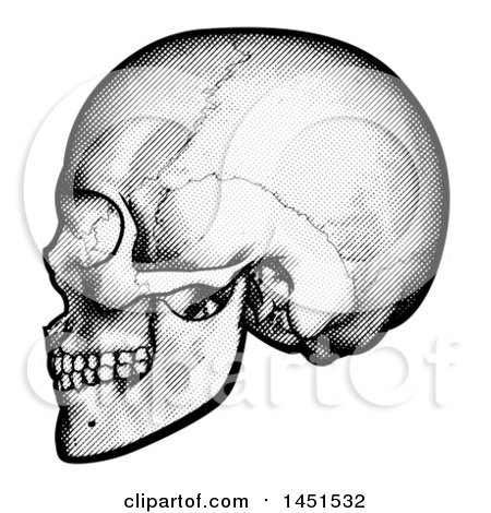 Clipart Graphic of a Black and White Engraved Human Skull in Profile - Royalty Free Vector Illustration by AtStockIllustration