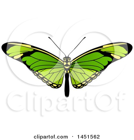 Clipart Graphic of a Beautiful Green Butterfly or Moth - Royalty Free Vector Illustration by AtStockIllustration