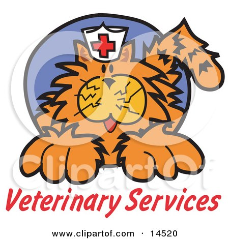 """Orange Cat Wearing A White Nursing Hat With A Red Cross On It Above Text Reading """"Veterinary Services"""" Clipart Illustration by Andy Nortnik"""