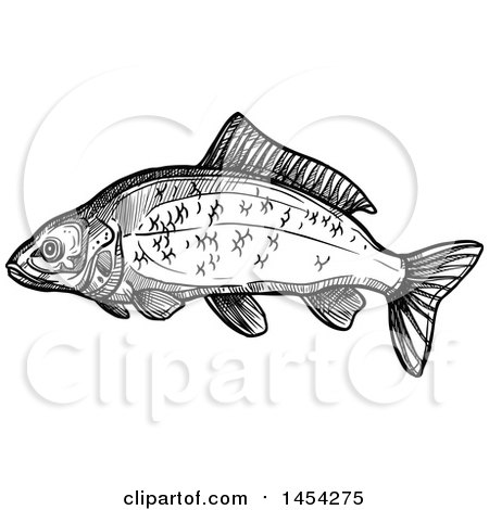 Clipart Graphic of a Black and White Sketched Carp Fish - Royalty Free Vector Illustration by Vector Tradition SM