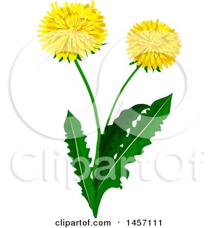 Dandelion Plant with Flowers Posters, Art Prints