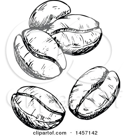 Clipart of Black and White Sketched Coffee Beans - Royalty ...
