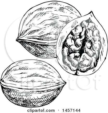 Clipart of Black and White Sketched Walnuts - Royalty Free ...