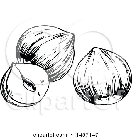 Clipart of Black and White Sketched Hazelnuts - Royalty Free Vector Illustration by Vector Tradition SM