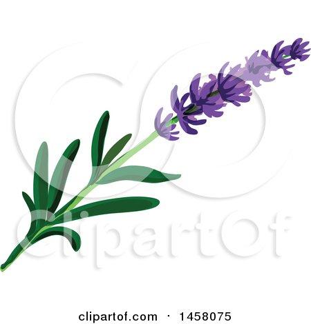 clipart of a lavender sprig royalty free vector illustration by rh clipartof com Lavender Sprig Clip Art Black and White Lavender Sprig Outline
