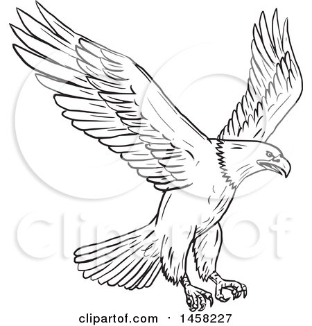 Clipart of a Flying Bald Eagle, in Sketched Black and White Style - Royalty Free Vector Illustration by patrimonio