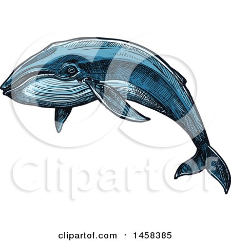 Clipart of a Whale in Sketched Style - Royalty Free Vector Illustration by Vector Tradition SM