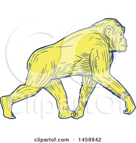 Clipart of a Yellow Walking Chimpanzee, in Sketched Drawing Style - Royalty Free Vector Illustration by patrimonio