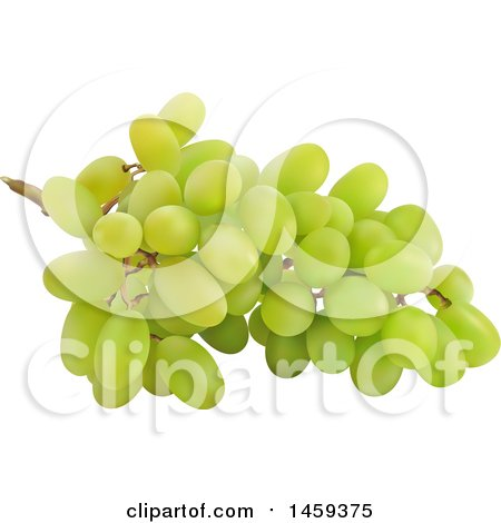 Clipart of a 3d Bunch of Green Grapes - Royalty Free Vector Illustration by cidepix