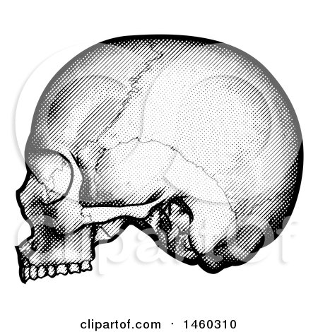 Clipart of a Human Skull in Profile, Black and White Vintage Etched Style - Royalty Free Vector Illustration by AtStockIllustration