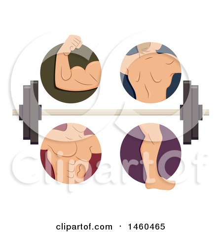 Clipart of Male Muscles in Biceps, Back, Torso and Legs with a Barbell - Royalty Free Vector Illustration by BNP Design Studio