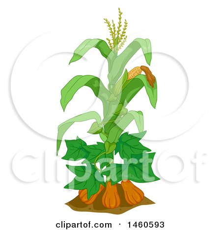Clipart of a Corn Plant with Gourds and Beans - Royalty Free Vector Illustration by BNP Design Studio