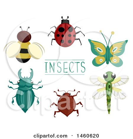 Clipart of Different Insects like Bee, Lady Bug, Butterfly, Dragonfly, Ground Beetle and Stag Beetle - Royalty Free Vector Illustration by BNP Design Studio