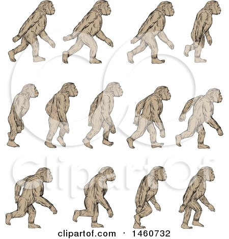 Clipart of a Set of Homo Habilis Walking, in Motion, in Sketched Drawing Style - Royalty Free Vector Illustration by patrimonio
