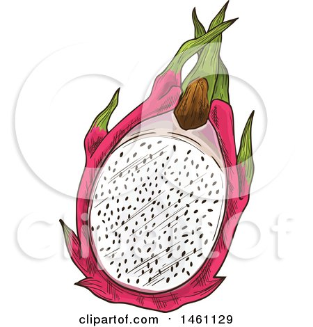 Clipart of a Sketched Dragon Fruit - Royalty Free Vector Illustration by Vector Tradition SM