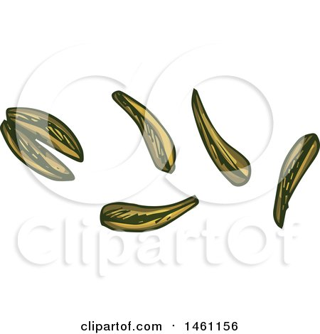 Clipart of Sketched Cumin Seeds - Royalty Free Vector Illustration by Vector Tradition SM