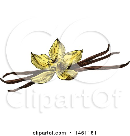 Clipart of a Sketched Vanilla Flower and Pods - Royalty Free Vector Illustration by Vector Tradition SM