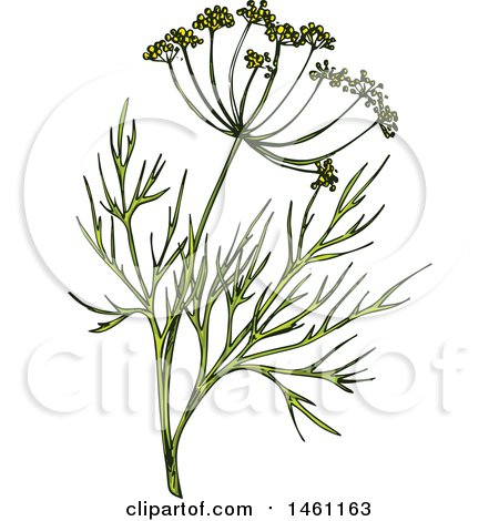 Clipart of a Sketched Dill Sprig - Royalty Free Vector Illustration by Vector Tradition SM