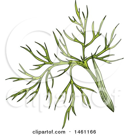 Clipart of a Sketched Cumin Sprig - Royalty Free Vector Illustration by Vector Tradition SM