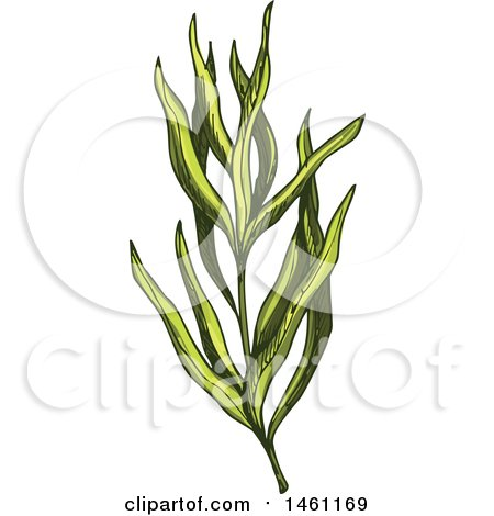Clipart of a Sketched Tarragon Sprig - Royalty Free Vector Illustration by Vector Tradition SM
