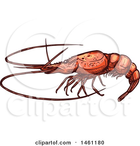 Clipart of a Sketched Lobster - Royalty Free Vector Illustration by Vector Tradition SM