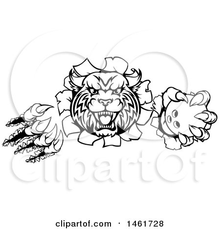 Clipart of a Vicious Wildcat Mascot Slashing Through a Wall and Holding a Bowling Ball - Royalty Free Vector Illustration by AtStockIllustration