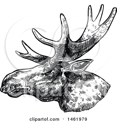 Clipart of a Sketched Black and White Moose Head in Profile - Royalty Free Vector Illustration by Vector Tradition SM
