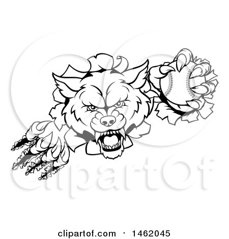 Clipart of a Black and White Tough Wolf Mascot Breaking Through a Wall and Holding a Baseball - Royalty Free Vector Illustration by AtStockIllustration