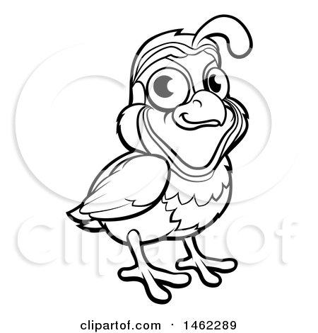 Clipart Of A Black And White Quail Bird