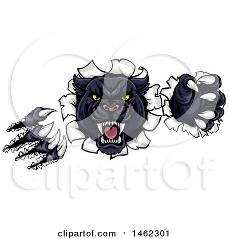 Clipart of a Vicious Roaring Black Panther Mascot Shredding Through a Wall - Royalty Free Vector Illustration by AtStockIllustration