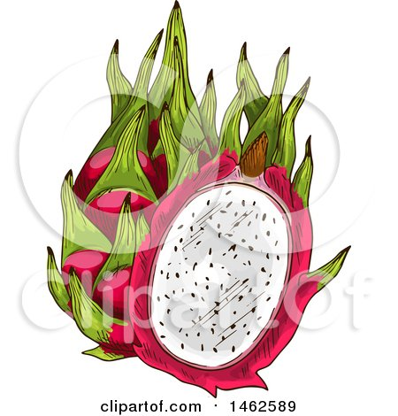 Clipart of a Sketched Dragonfruit - Royalty Free Vector Illustration by Vector Tradition SM
