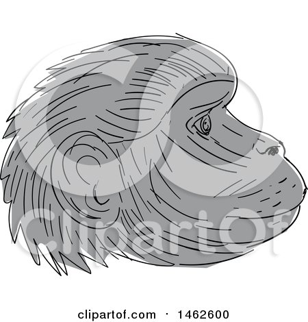 Clipart of a Grayscale Gelada Monkey Face in Profile, in Drawing Sketch Style - Royalty Free Vector Illustration by patrimonio