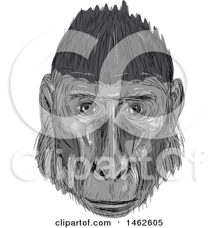 Clipart of a Grayscale Crested Black Macaque Monkey Face, in Drawing Sketch Style - Royalty Free Vector Illustration by patrimonio
