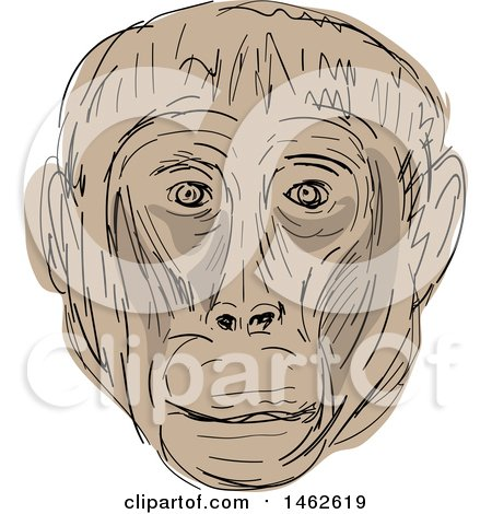 Clipart of a Tan Gelada Monkey Face, in Drawing Sketch Style - Royalty Free Vector Illustration by patrimonio