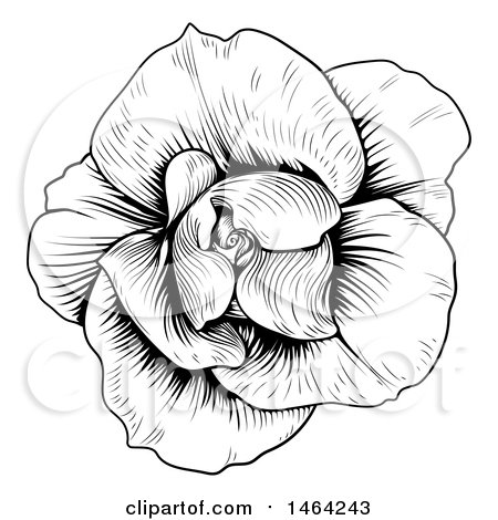 Clipart of a Black and White Rose Flower in Woodcut Style - Royalty Free Vector Illustration by AtStockIllustration