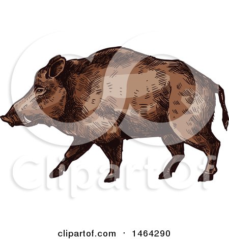 Clipart of a Sketched Boar - Royalty Free Vector Illustration by Vector Tradition SM