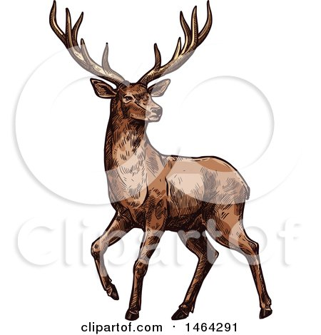Clipart of a Sketched Deer - Royalty Free Vector Illustration by Vector Tradition SM