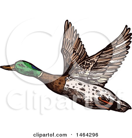 Clipart of a Sketched Flying Mallard Duck - Royalty Free Vector Illustration by Vector Tradition SM