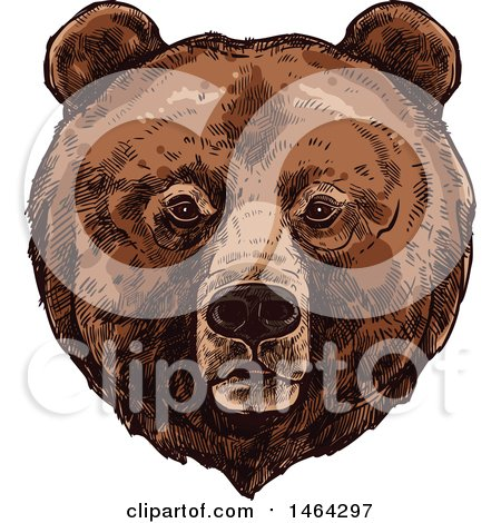 Clipart of a Sketched Bear - Royalty Free Vector Illustration by Vector Tradition SM