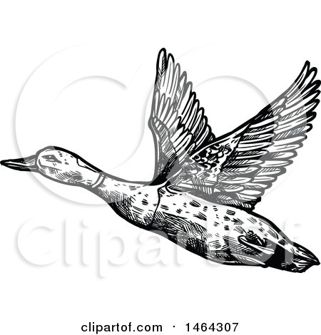 Clipart of a Sketched Black and White Flying Mallard Duck - Royalty Free Vector Illustration by Vector Tradition SM