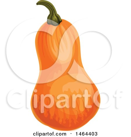 Clipart of a Squash - Royalty Free Vector Illustration by Vector Tradition SM